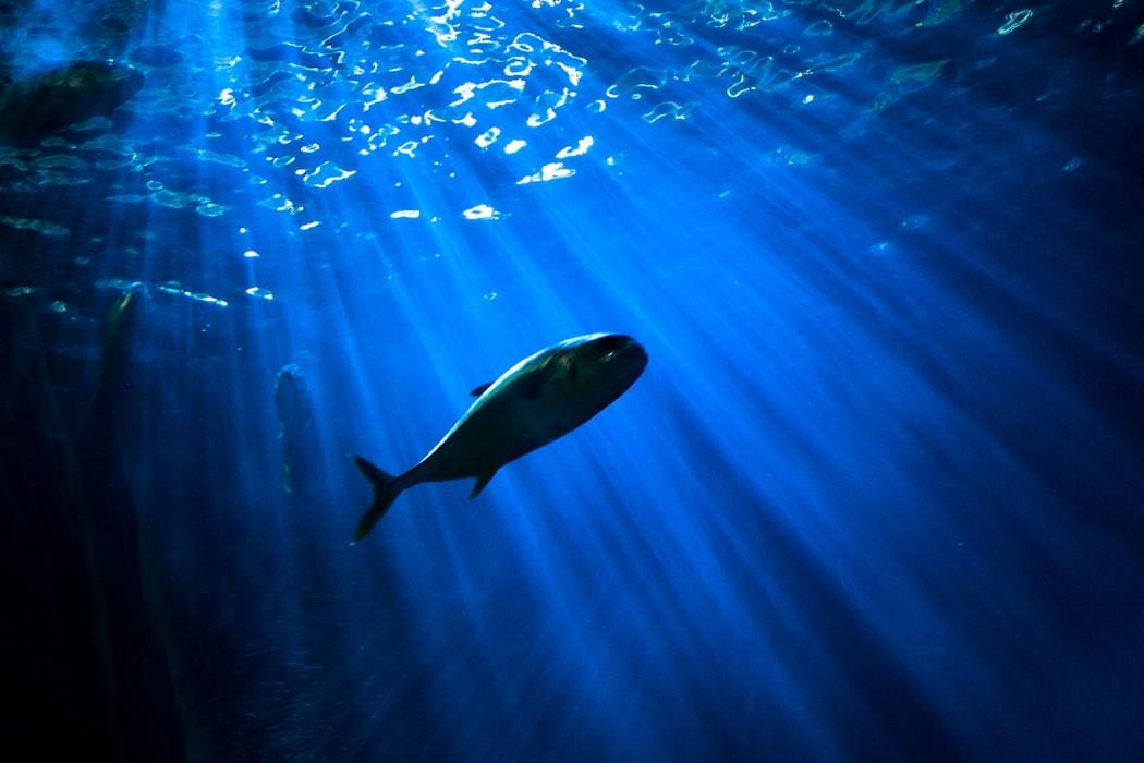 Problèmes de surpêche dans l'océan