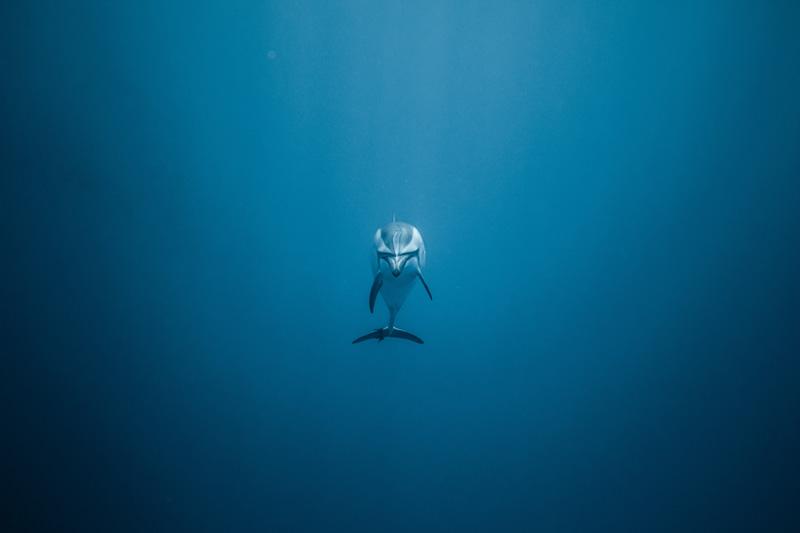 O'dyssey la journée des océans créé par Free Spirit