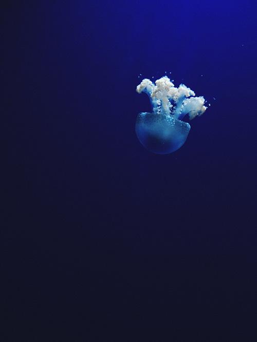 Objectifs et agenda de la journée des océans